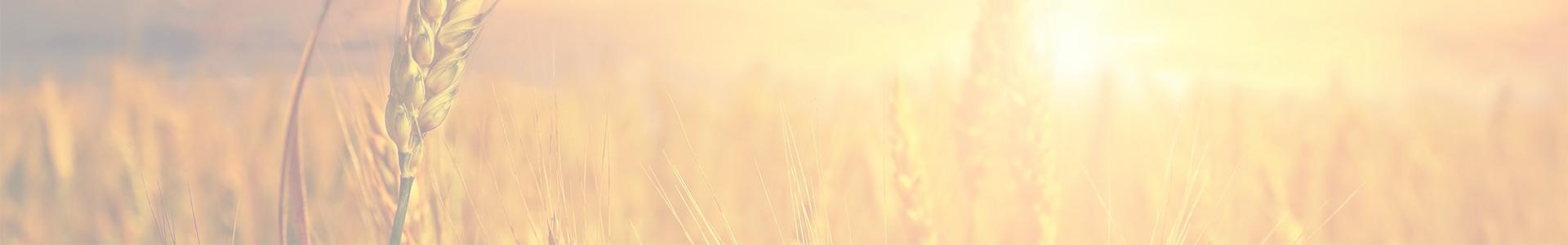 wheat avemar banner